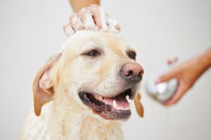 dog taking bath